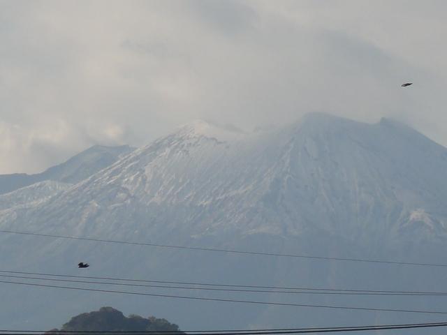 桜島初雪1.JPG