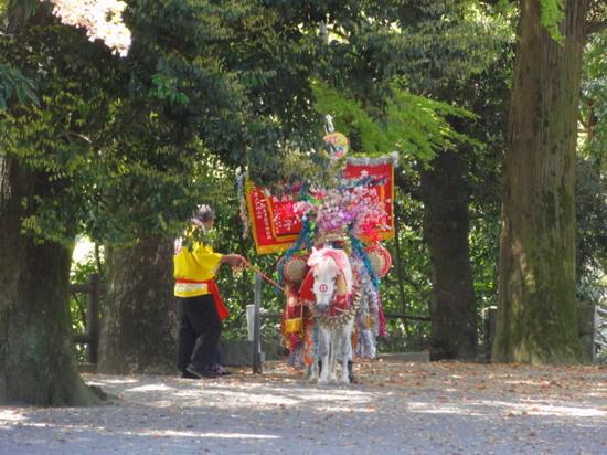 ななつ星と鹿児島神宮1.JPG