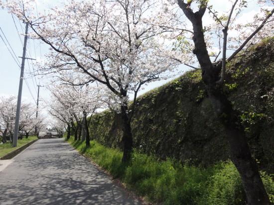 冨隈城6.JPG