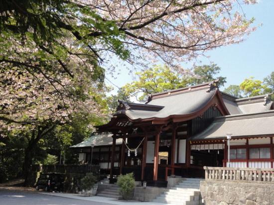 鹿児島神宮の桜.JPG