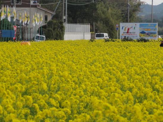 菜の花マラソン救護ボランティア2016.JPG