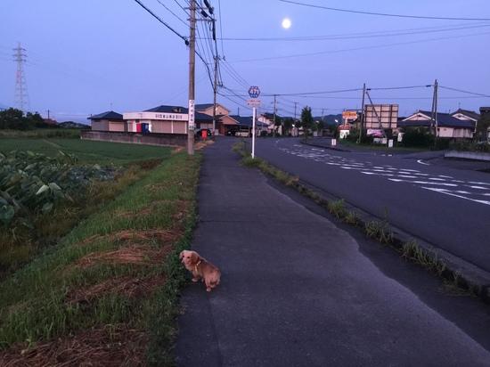 2016.7.21.JPG