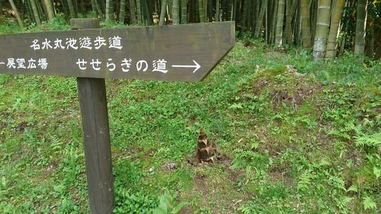 湧水町の筍.JPG