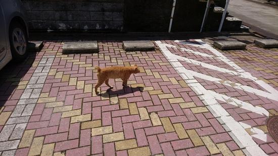 崎津の猫」.JPG