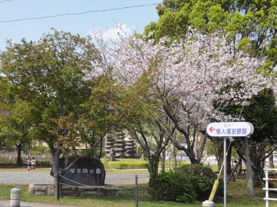 隼人塚の桜.JPG