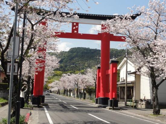 鹿児島神宮の桜1.JPGのサムネイル画像