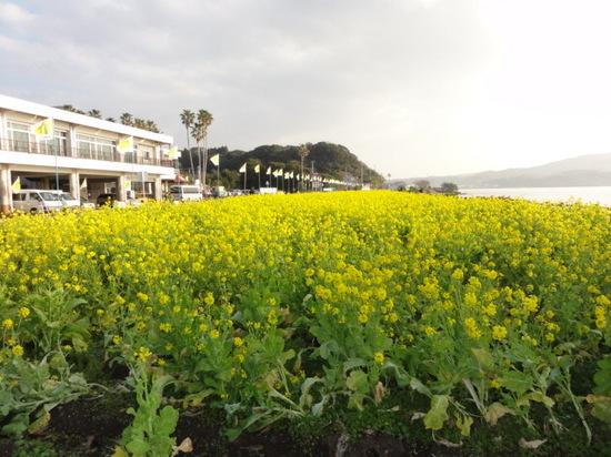 池田湖と菜の花.JPG
