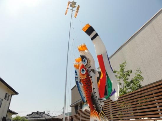 鯉のぼり2015.5.8.JPG