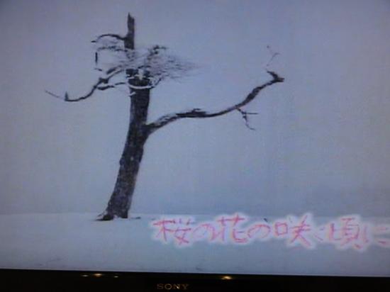 桜の花の咲く頃に 冬.JPG